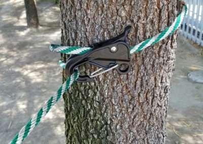 danik hook tree